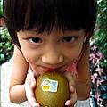 2012-0714 -紐西蘭Sun Gold黃金奇異果 (12)