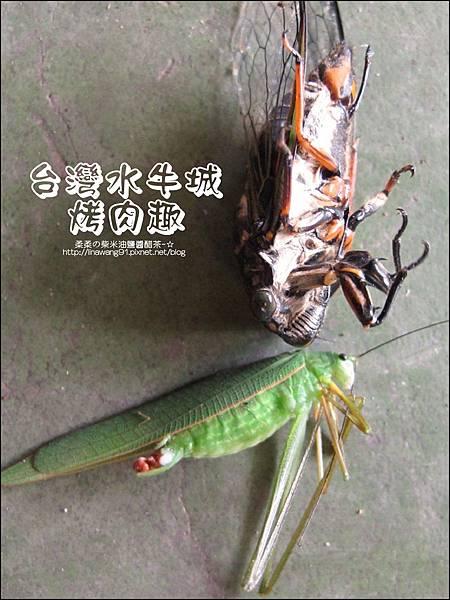 2012-0629-苗栗後龍-台灣水牛城-玩水烤肉