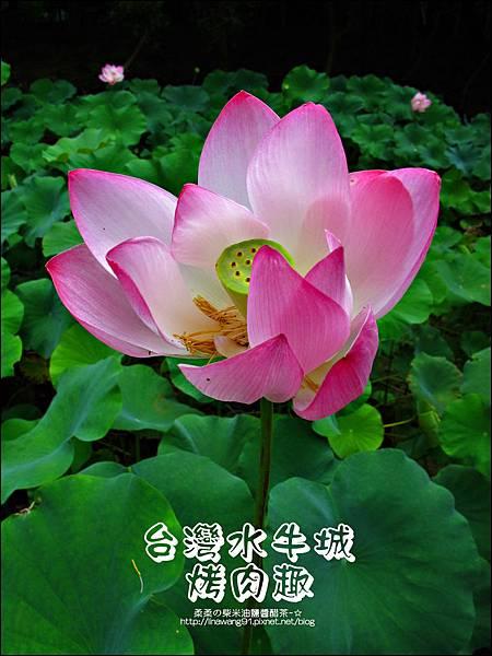 2012-0629-苗栗後龍-台灣水牛城-玩水烤肉 (7)