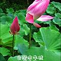 2012-0629-苗栗後龍-台灣水牛城-玩水烤肉 (8)