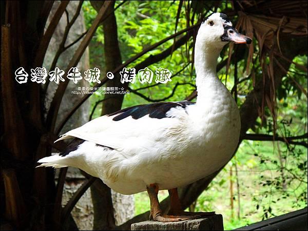 2012-0629-苗栗後龍-台灣水牛城-玩水烤肉 (26)