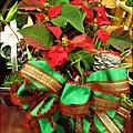 2012-1218-聖誕紅組合盆栽 (6)