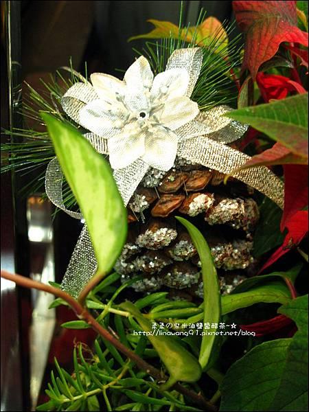 2012-1218-聖誕紅組合盆栽 (9)
