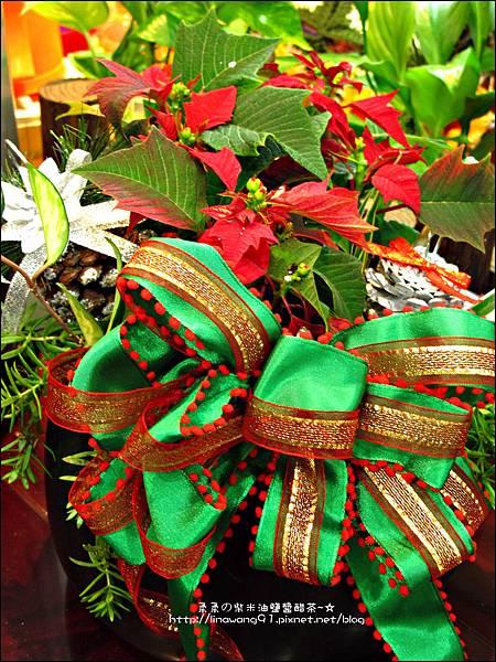 2012-1218-聖誕紅組合盆栽 (11)