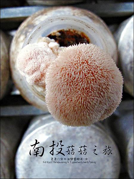 2012-0420-豐年靈芝菇類生態農場 (5)