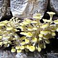 2012-0420-豐年靈芝菇類生態農場 (8)