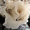 2012-0420-豐年靈芝菇類生態農場 (9)