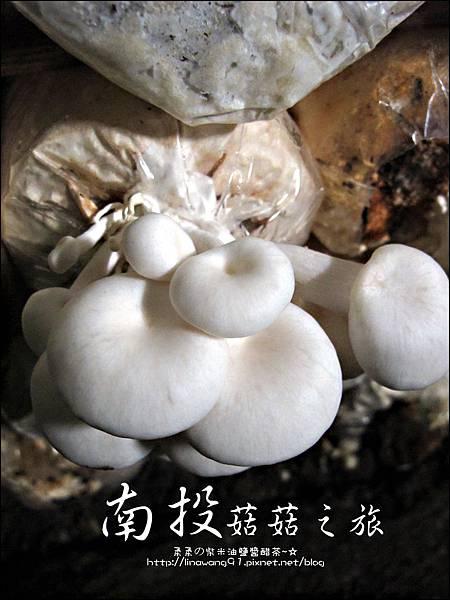 2012-0420-豐年靈芝菇類生態農場 (11)