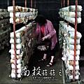 2012-0420-豐年靈芝菇類生態農場 (13)