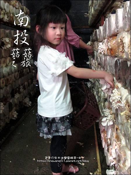 2012-0420-豐年靈芝菇類生態農場 (15)