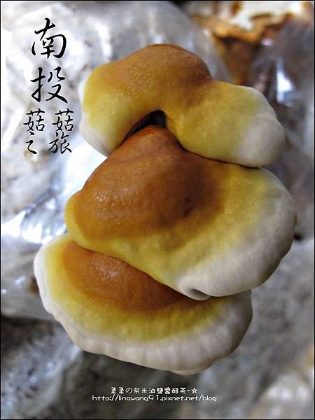 2012-0420-豐年靈芝菇類生態農場 (19)