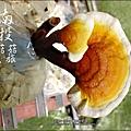 2012-0420-豐年靈芝菇類生態農場 (21)