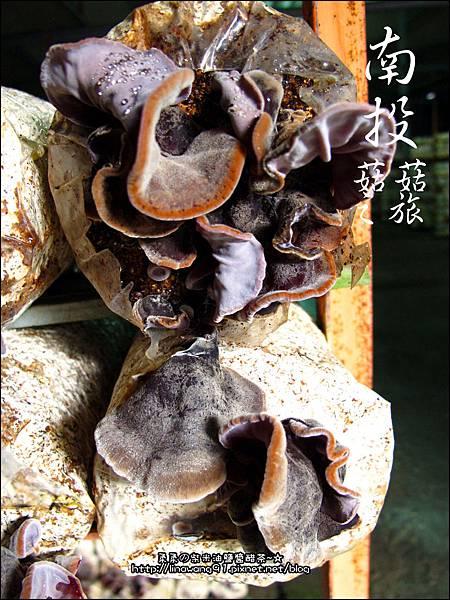 2012-0420-豐年靈芝菇類生態農場 (22)