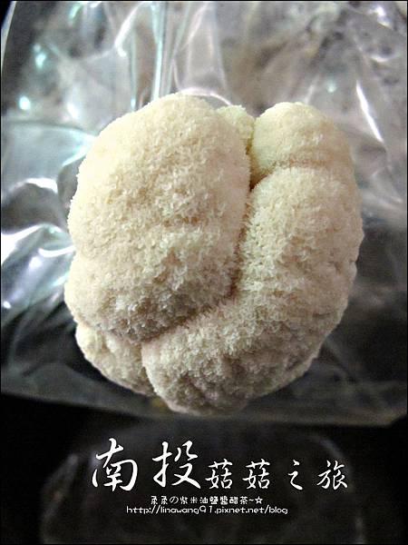 2012-0420-豐年靈芝菇類生態農場 (23)