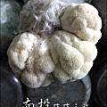 2012-0420-豐年靈芝菇類生態農場 (24)