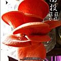 2012-0420-豐年靈芝菇類生態農場 (26)