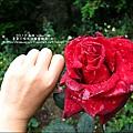 2012-0419-0420-南投-清境普羅旺斯玫瑰莊園villa館 (36)
