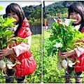 2013-0216-Yuki 5Y1M第一次拔蘿蔔 (3)