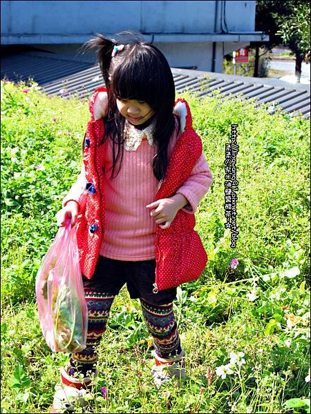 2013-0216-Yuki 5Y1M第一次拔蘿蔔 (13)