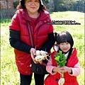2013-0216-Yuki 5Y1M第一次拔蘿蔔 (15)