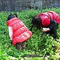 2013-0216-Yuki 5Y1M第一次拔蘿蔔 (19)
