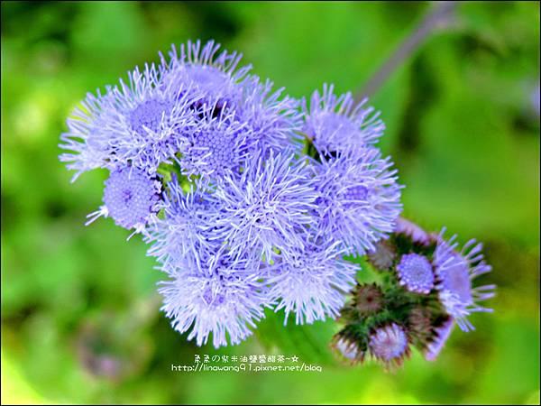 2013-0216-Yuki 5Y1M第一次拔蘿蔔 (22)