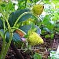 2013-0218-在家DIY種草莓