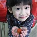 2013-0309-在家DIY種草莓 (2)
