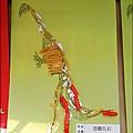 2012-0820-幼稚園中班上學期-恐龍週-Yuki 4Y7M