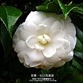2013-0111-0112-石壁溫泉渡假山莊-慶生會 (58)