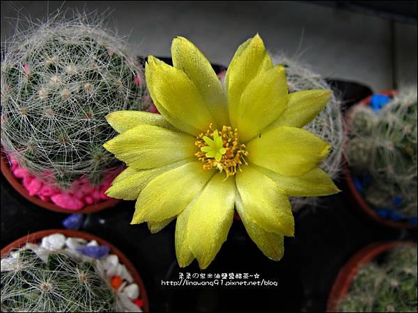 2012-0329-新竹關西-金勇DIY蕃茄農場