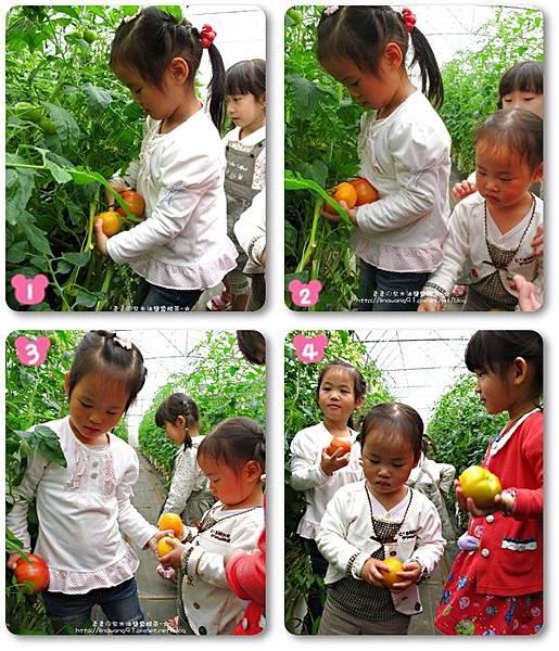 2012-0329-新竹關西-金勇DIY蕃茄農場 (2)