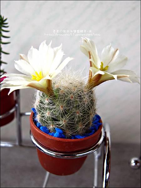2012-0329-新竹關西-金勇DIY蕃茄農場 (6)