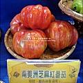 2012-0329-新竹關西-金勇DIY蕃茄農場 (11)