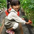 2012-0329-新竹關西-金勇DIY蕃茄農場 (17)