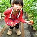 2012-0329-新竹關西-金勇DIY蕃茄農場 (18)