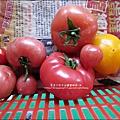 2012-0329-新竹關西-金勇DIY蕃茄農場 (23)