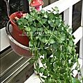 2012-0925-花園可愛插牌.jpg