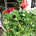 2012-0925-花園可愛插牌 (1).jpg