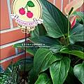2012-0925-花園可愛插牌 (6).jpg