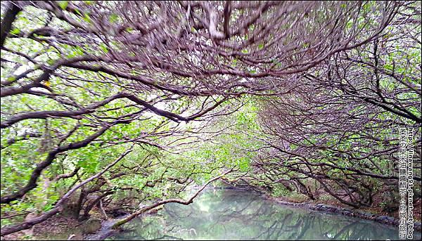 2012-1209-台南-四草紅樹林綠色隧道 (23).jpg