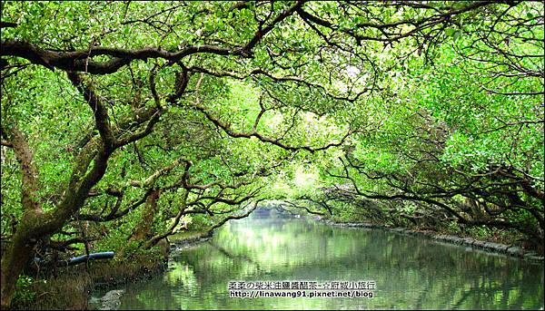 2012-1209-台南-四草紅樹林綠色隧道 (26).jpg