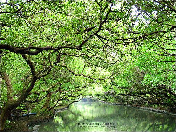 2012-1209-台南-四草紅樹林綠色隧道 (27).jpg