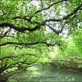 2012-1209-台南-四草紅樹林綠色隧道 (28).jpg