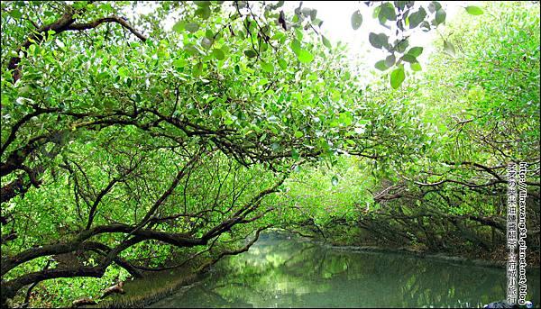 2012-1209-台南-四草紅樹林綠色隧道 (29).jpg