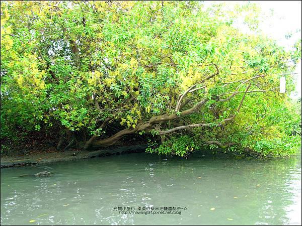 2012-1209-台南-四草紅樹林綠色隧道 (30).jpg