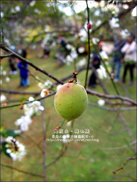2014-0101-桃園-角板山公園 (17).jpg