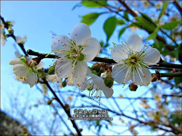 2014-0101-桃園-角板山公園 (27).jpg