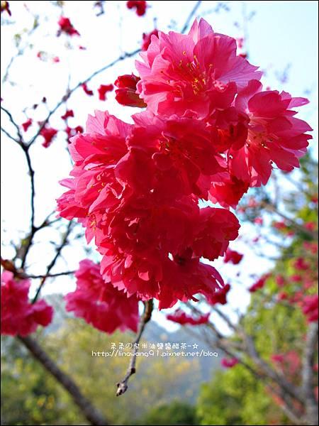 2014-0131-谷關溫泉公園 (11).jpg