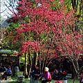2014-0131-谷關溫泉公園 (21).jpg